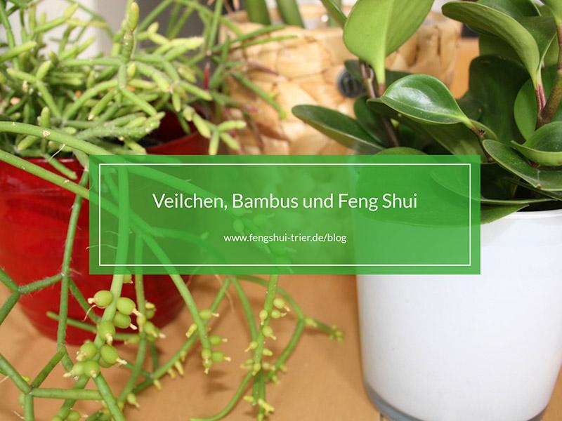 Veilchen, Bambus und Feng Shui