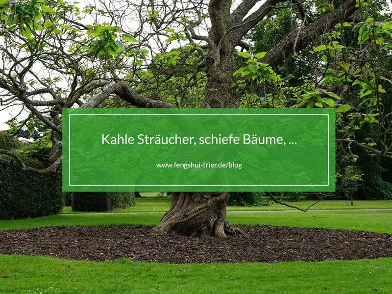 Kahle Sträucher, schiefe Bäume, ...